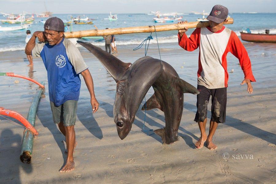 Главный рыбный рынок Бали