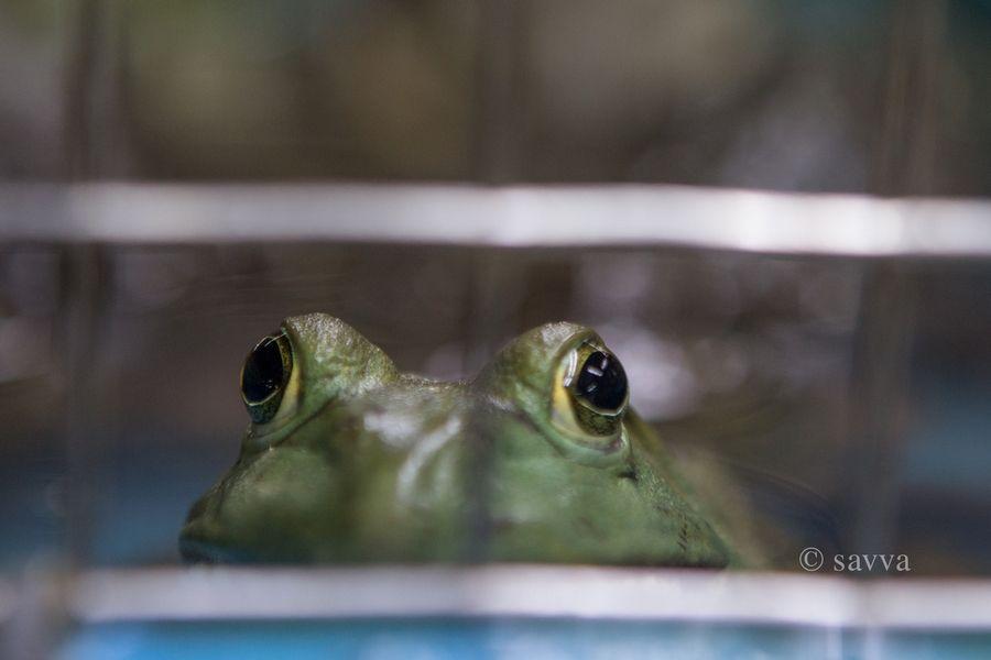 Жизнь лягушки на сингапурском рынке в четырех фотографиях