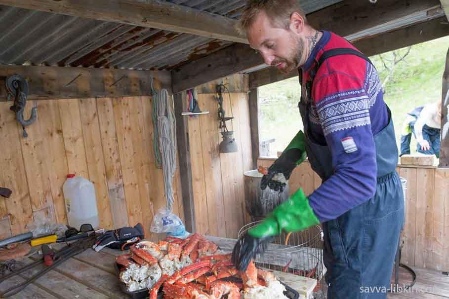 Королевский краб. Правила охоты в Норвегии